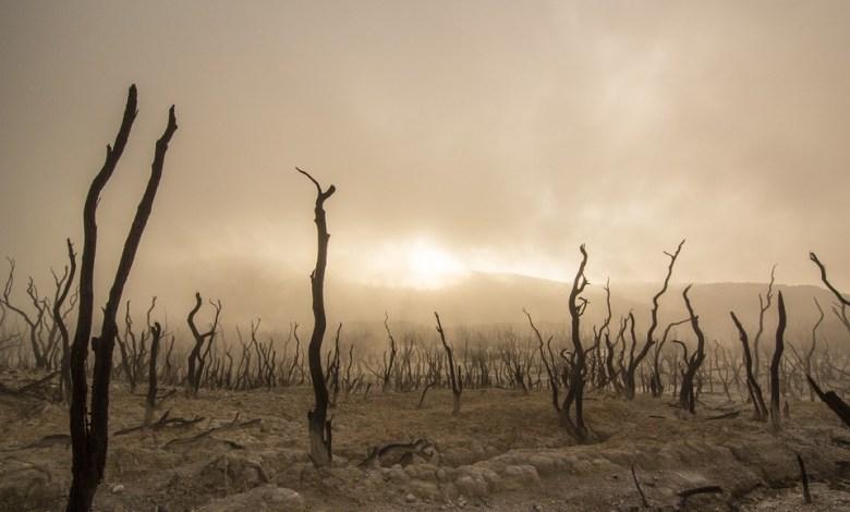 naravnih nesreč, Združeni narodi, poročilo, naravnih nesreč, uničevalni
