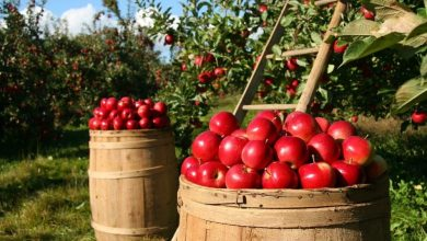 svetovnim dnevom hrane, FAO, Svetovna organizacija za hrano in kmetijstvo