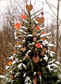 Decorate an Outdoor Holiday Tree for Animals - Dot Com Women