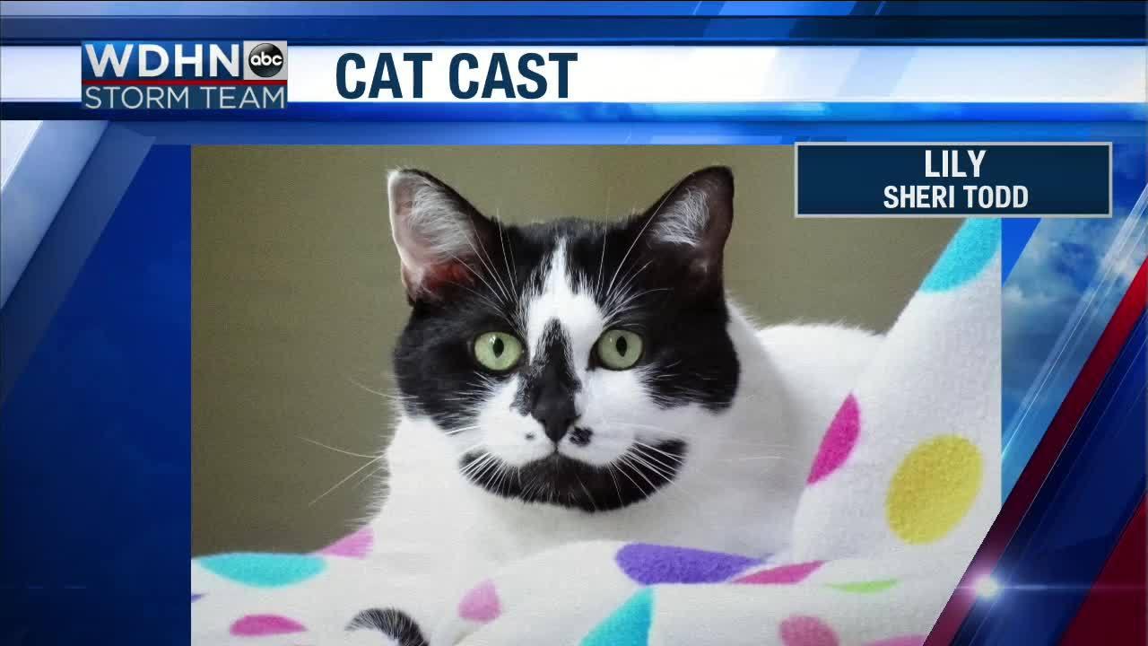 Wake_Up_Wiregrass__Cat_Cast_starring_Lil_6_20190419130625
