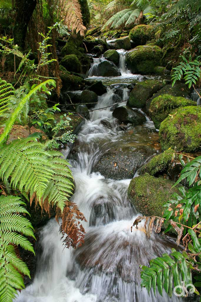 Warburton-Rainforest-Gallery-Stream