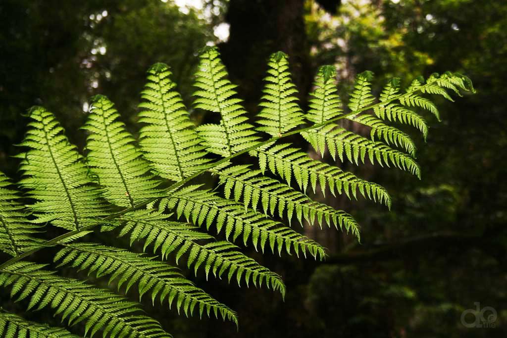 Warburton-Rainforest-Gallery-do-the-yarra-valley