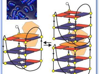 Nanofilamenti di DNA per terapia antitumorale, studio di ricercatori perugini
