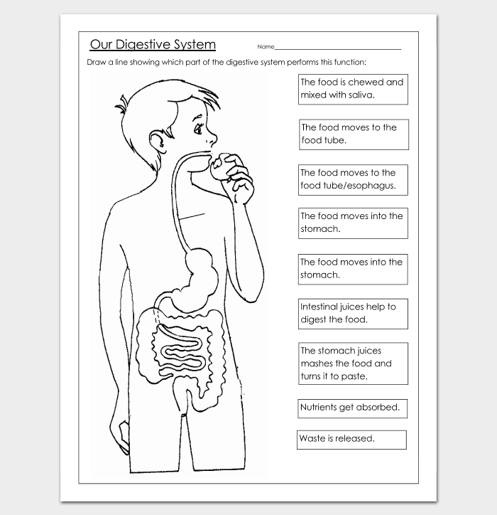 Human Body Outline Template 32 Printable Worksheets