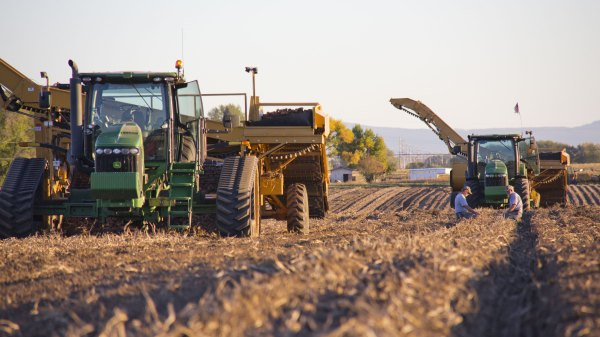 Potato Harvesting Equipment