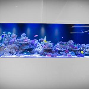 Omada Capital ambient fish tank