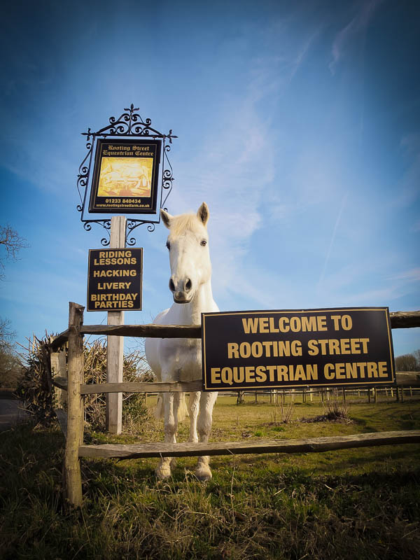 Rooting Street Equestrian Centre photography by Doug Harman. Hothfield, Kent.