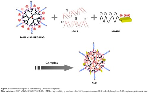 small resolution of figure 2 a schematic diagram of self assembly dhp nanocomplexes abbreviations dhp pdna hmgb1 pssp rgd hmgb1 high mobility group box 1 pamam