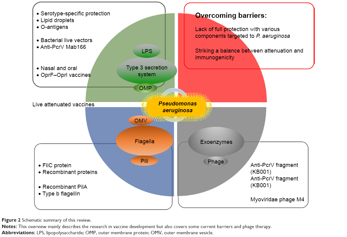 hight resolution of figure 2 schematic summary of this review notes this overview mainly describes the research in vaccine development but also covers some current barriers