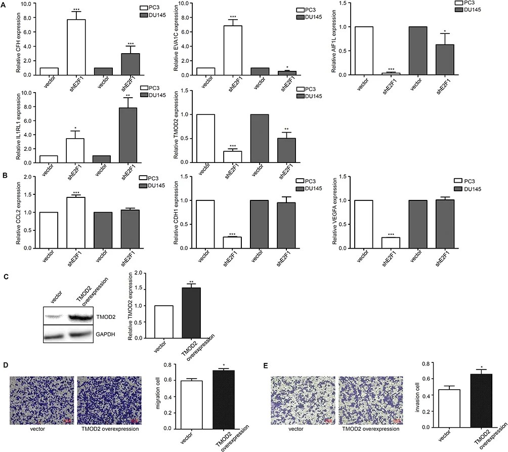 [Full text] Key Genes And Pathways Controlled By E2F1 In