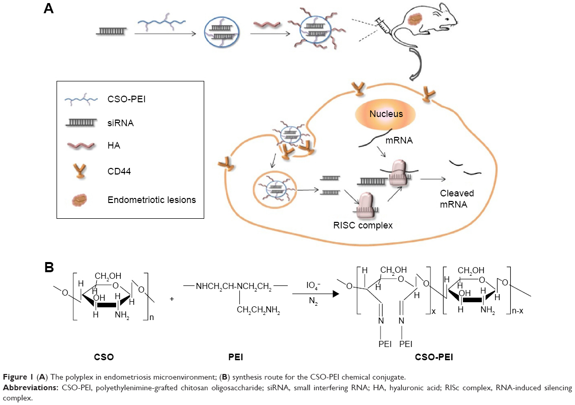 hight resolution of abbreviations cso pei polyethylenimine grafted chitosan oligosaccharide sirna small interfering rna ha hyaluronic acid risc complex rna induced
