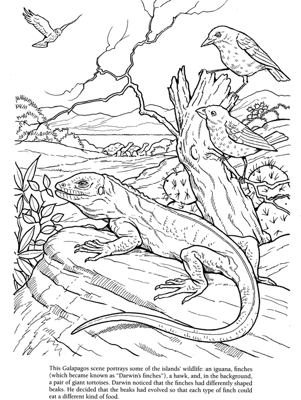 galapagos map Colouring Pages