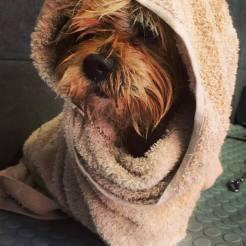 toelettatura per cani a reggio emilia