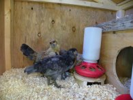 opening to nesting boxes