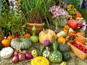 Colorful gourds at the Common Ground Fair
