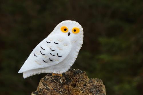 Cute Fall Owls Hd Wallpaper A Downeast Thunder Farm Snowy Owl Downeast Thunder Farm