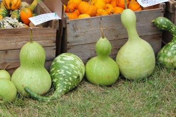 graceful gourds