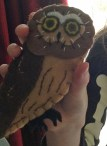 Debra's Saw Whet Owl