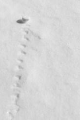 rolling snow tracks