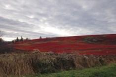 Brilliant autumn barren
