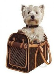dogcarrier2