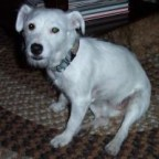 Jazzy the JRT