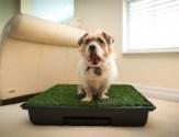 Potty Park and Dog