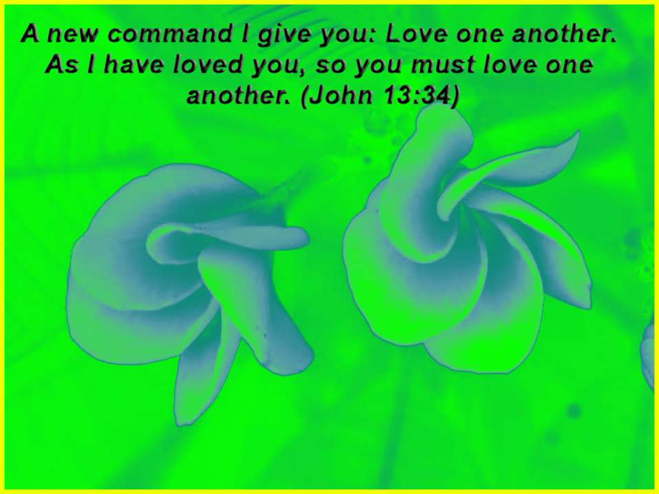 Love One Another By Jesus