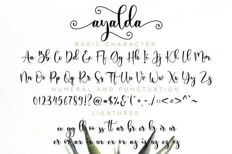 ayalda-calligraphy-font-3