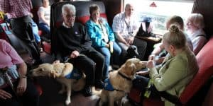 Guide dog puppies in training in one of our carriages
