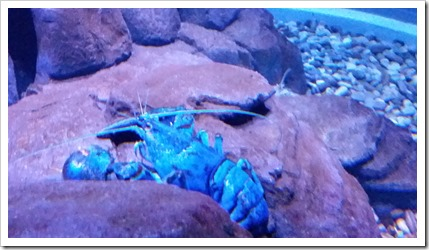 Ripley's Aquarium of Canada Wordless Wednesday DownshiftingPRO_6