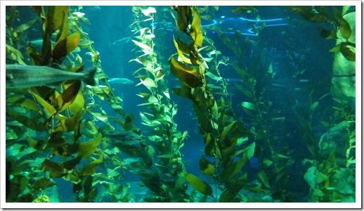 Ripley's Aquarium of Canada Wordless Wednesday DownshiftingPRO_8