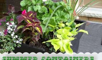 Summer Containers  – Fast, Easy and Cheap #Gardening with @DownshiftingPRO