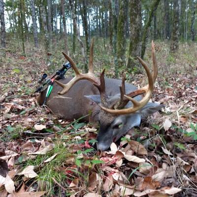 Deer Hunting South