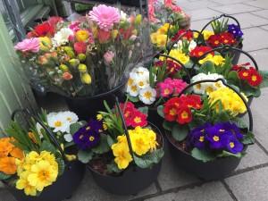 Down To Earth Selkirk Flower Pots