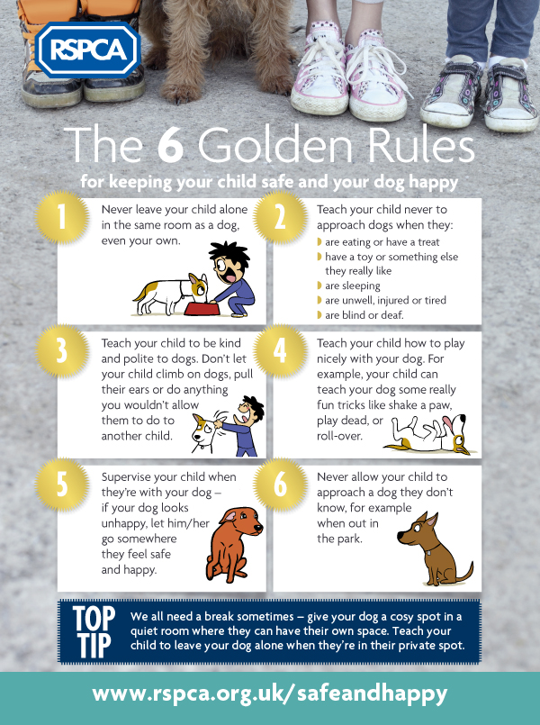 info1 - Best Bully Sticks Dog Treats for Training Dogs
