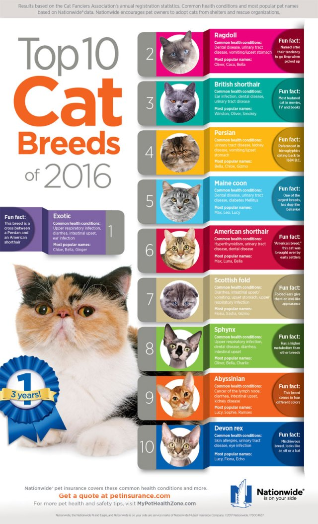 info2 - 8 Cat Breeds to Adopt if You're a Careless Owner