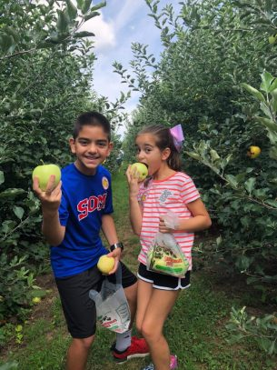 Apple picking in Fairfield County