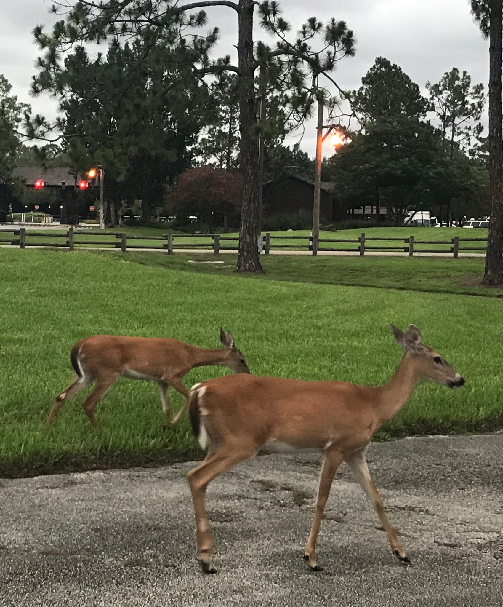Deer Disney moderate resorts