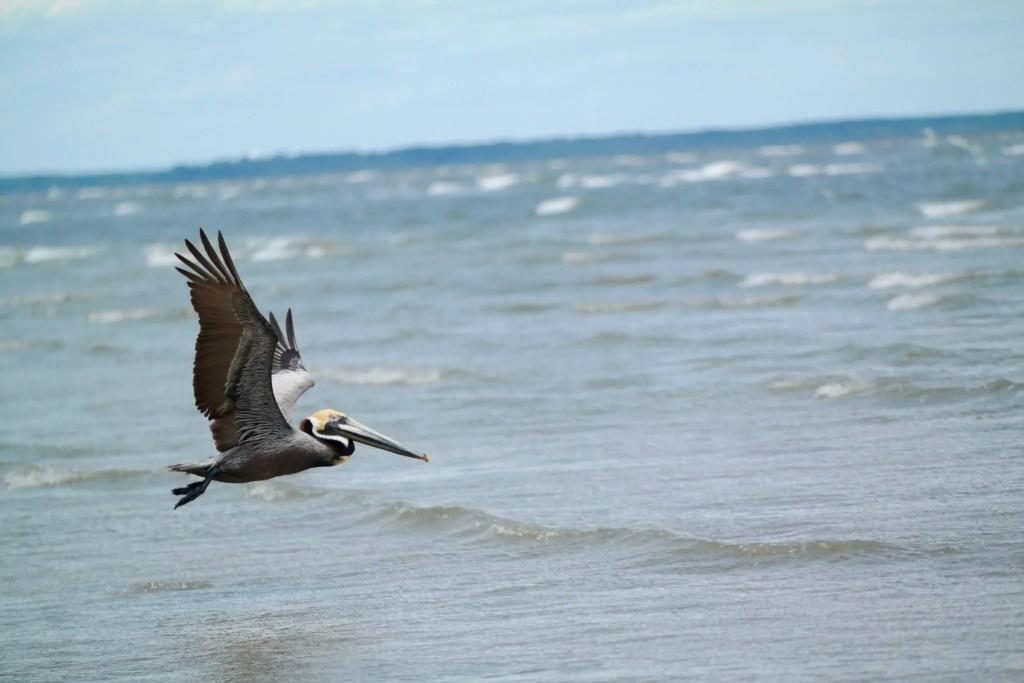 best family vacation spots on the East Coast - Hilton Head