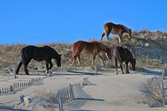 Things to do in OBX horses