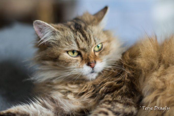 Lady, the lovely housecat