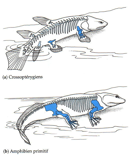 Evolution: Theory Of Evolution