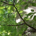 Siebengebirge naturaleza, arboles, haya