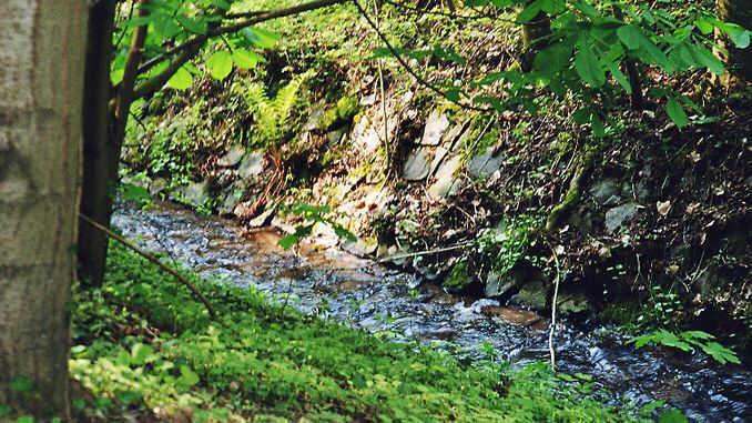 Ruisseau Mirbesbach, Siebengebirge, Königswinter