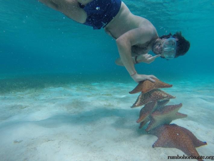 Starfish die from stress