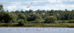 Birds-in-the-Estuary-2