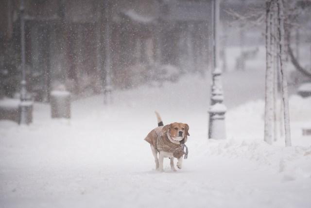 Iarna în București - Primele fotografii 25