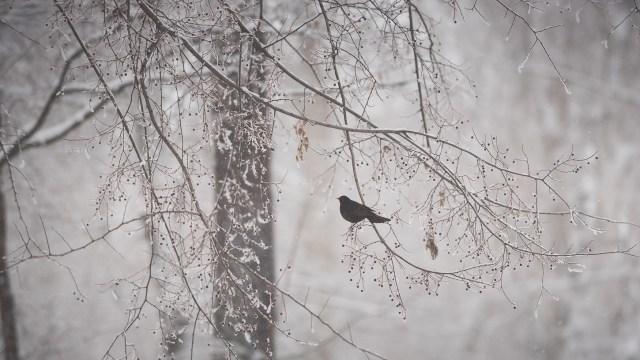 Iarna în București - Primele fotografii 30