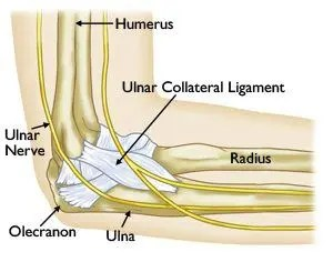 Ulnar Collateral Ligament Anatomy - El Paso Chiropractor